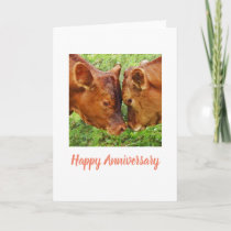 Two cows Anniversary Card