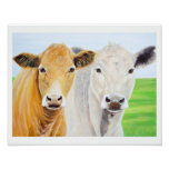 Two Cows for Oklahoma 11 x 14 Print