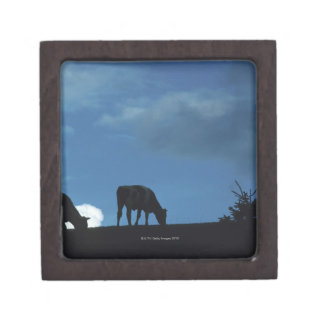 Two cows in silhouette grazing on hillside premium gift box