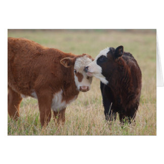 Two Cows Nuzzling Card
