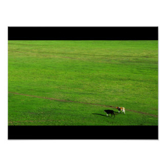 Two Cows on Panoramic Pasture Poster