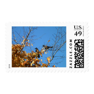 Two crows postage