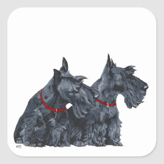 Two Curious Scottish Terriers Square Sticker