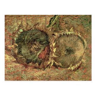 Two Cut Sunflowers, 1887 Postcard