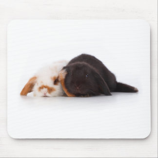 Two cute baby bunnies mouse mats
