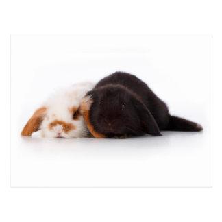 Two cute baby bunnies postcard