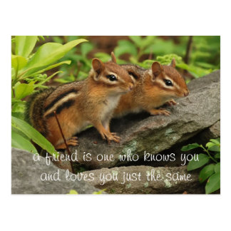 Two Cute Baby Chipmunks Friend Quote Postcard