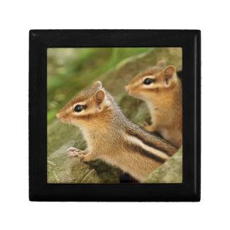 Two Cute Baby Chipmunks Keepsake Box