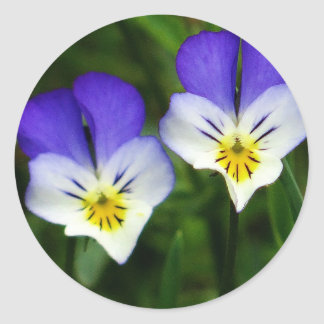 Two cute blue violets classic round sticker