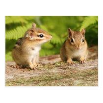 Two Cute Chipmunk Babies Postcard