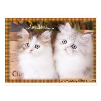Two Cute Cozy Kittens Postcard