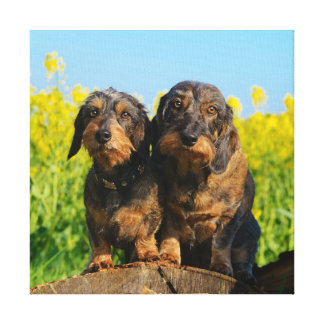 Two Cute Dachshunds Dogs Dackel Friends Pet Photo Canvas Print