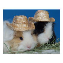 Two Cute Guinea Pigs Poster