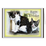 Two cute kittens  Birthday card