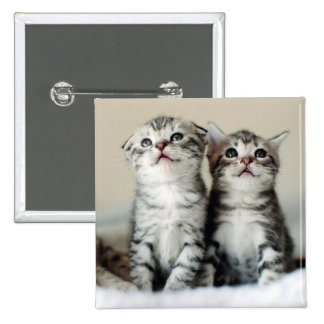 Two Cute Kittens On Bed Button
