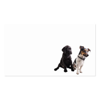 two cute little dogs business card