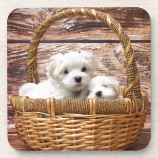 Two cute Maltese puppies sitting in a basket Beverage Coaster