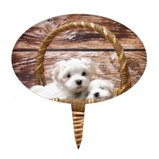 Two cute Maltese puppies sitting in a basket Cake Topper