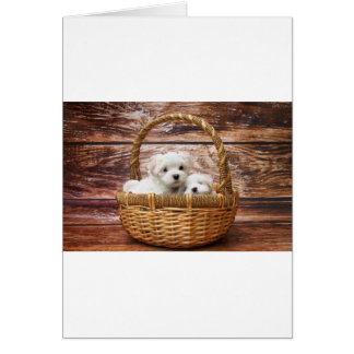 Two cute Maltese puppies sitting in a basket Card