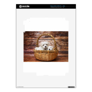 Two cute Maltese puppies sitting in a basket Decal For iPad 2