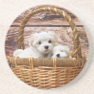 Two cute Maltese puppies sitting in a basket Drink Coaster