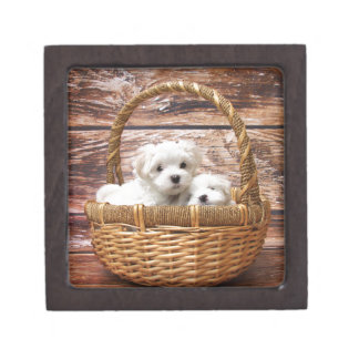 Two cute Maltese puppies sitting in a basket Gift Box