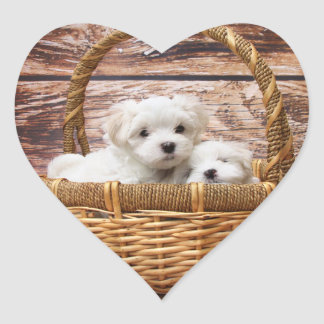 Two cute Maltese puppies sitting in a basket Heart Sticker