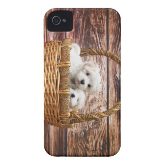 Two cute Maltese puppies sitting in a basket iPhone 4 Cover