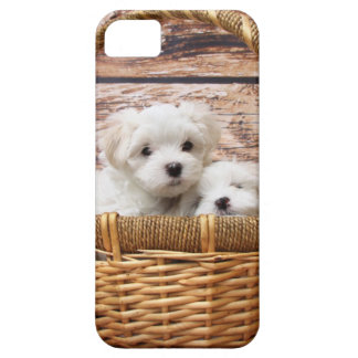 Two cute Maltese puppies sitting in a basket iPhone SE/5/5s Case