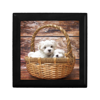 Two cute Maltese puppies sitting in a basket Jewelry Box