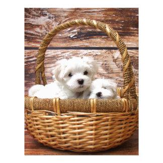 Two cute Maltese puppies sitting in a basket Letterhead