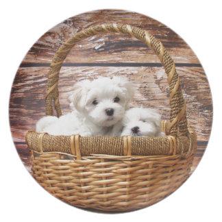 Two cute Maltese puppies sitting in a basket Melamine Plate