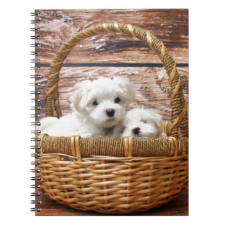 Two cute Maltese puppies sitting in a basket Notebook
