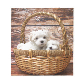 Two cute Maltese puppies sitting in a basket Notepad