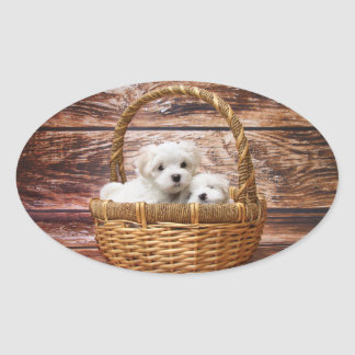 Two cute Maltese puppies sitting in a basket Oval Sticker