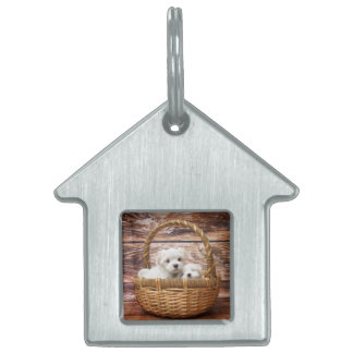 Two cute Maltese puppies sitting in a basket Pet Name Tag
