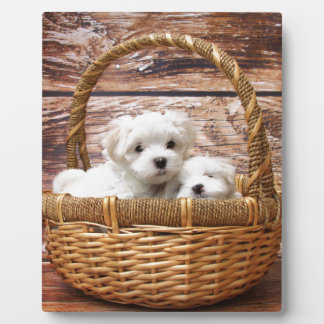 Two cute Maltese puppies sitting in a basket Plaque