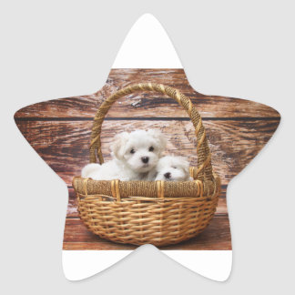 Two cute Maltese puppies sitting in a basket Star Sticker