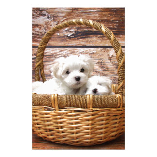 Two cute Maltese puppies sitting in a basket Stationery