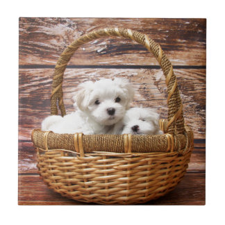 Two cute Maltese puppies sitting in a basket Tile