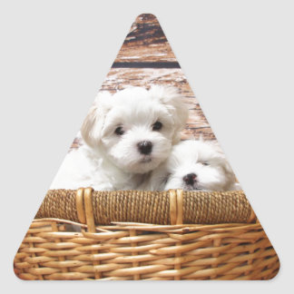 Two cute Maltese puppies sitting in a basket Triangle Sticker