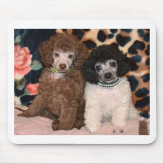 Two Cute Poodle Toy Poodle Puppies Mouse Pad