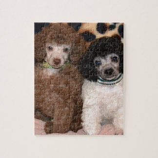 Two Cute Poodle Toy Poodle Puppies Jigsaw Puzzles