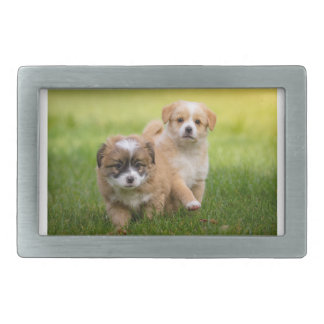 Two cute puppies playing and running a race belt buckle