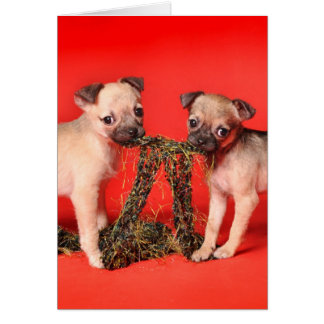 Two Cute Puppies Sharing Greeting Card