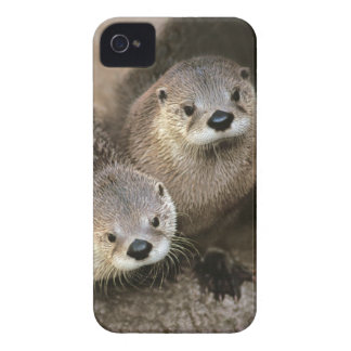 Two Cute River Otters (Lontra canadensis) iPhone 4 Case-Mate Case