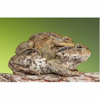 Two Cute Toads Cutout