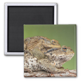 Two Cute Toads Magnet