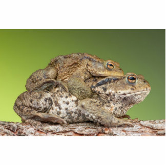 Two Cute Toads Photo Sculptures