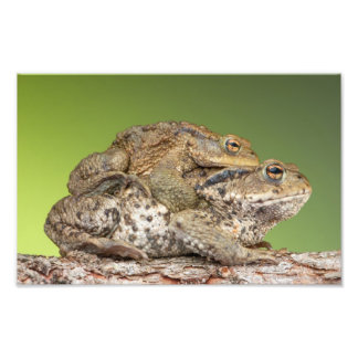Two Cute Toads Photo Art